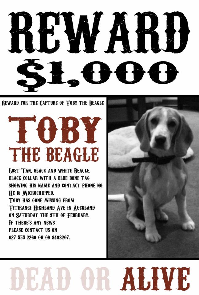 tobybeagle