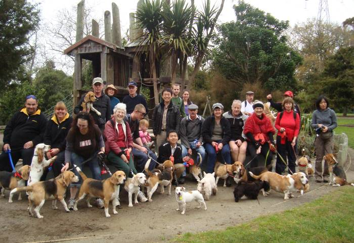 auckland beagle club - totara park - august 2011