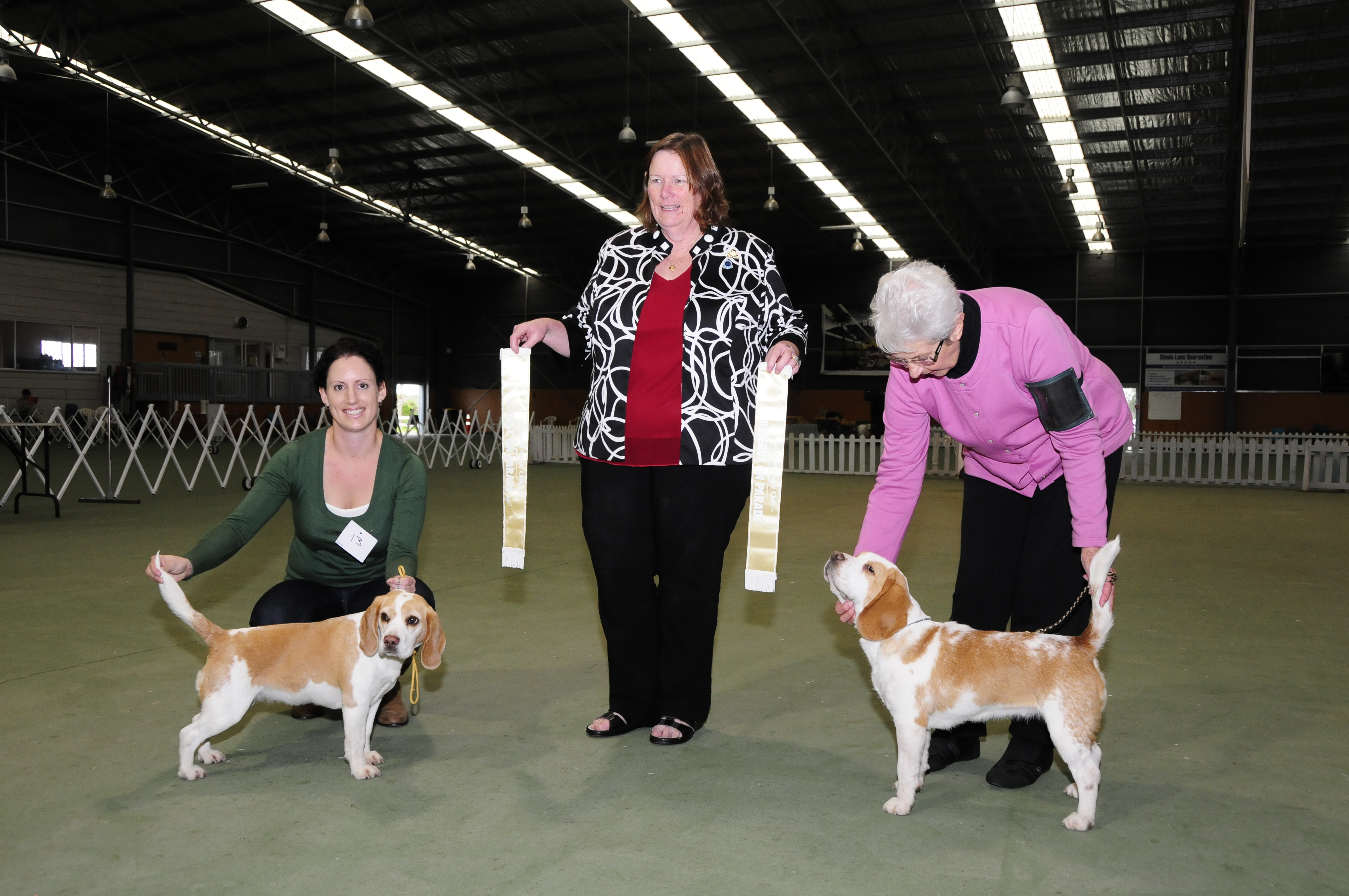 Auckland Beagle Club Ribbon Parade winners 2013